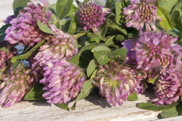 Herbal-Energy-Herbs-Homeobotanical-health-professional-3