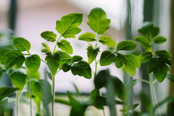 Herbal-Energy-Herbs-Homeobotanical-health-professional-5