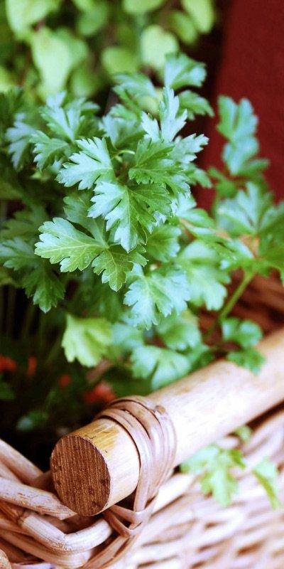Homeobotanicals-herbal-energy-bernie