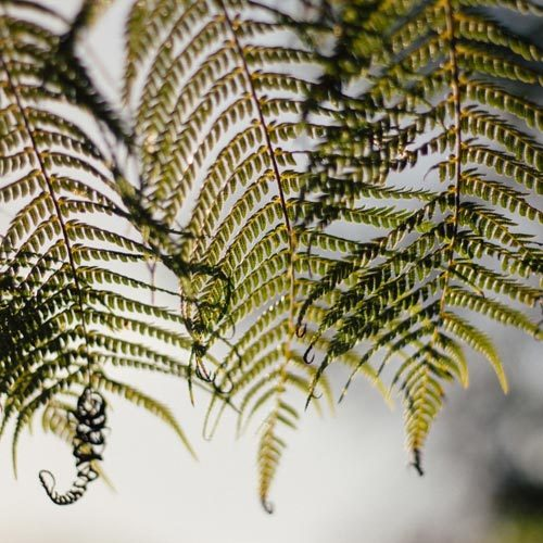NZ Native Herbs